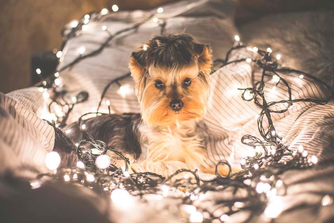 mascota entre luces de navidad