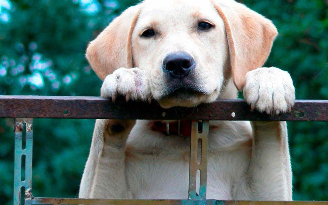 Consejos y ventajas de tener mascota en casa